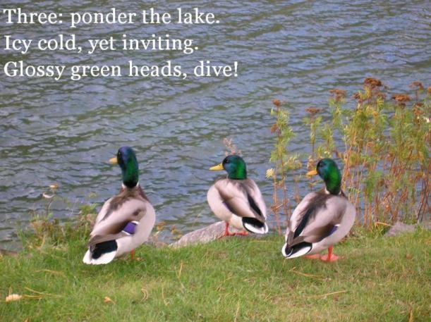 glossy green heads